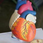 hjärtat vid osteopati