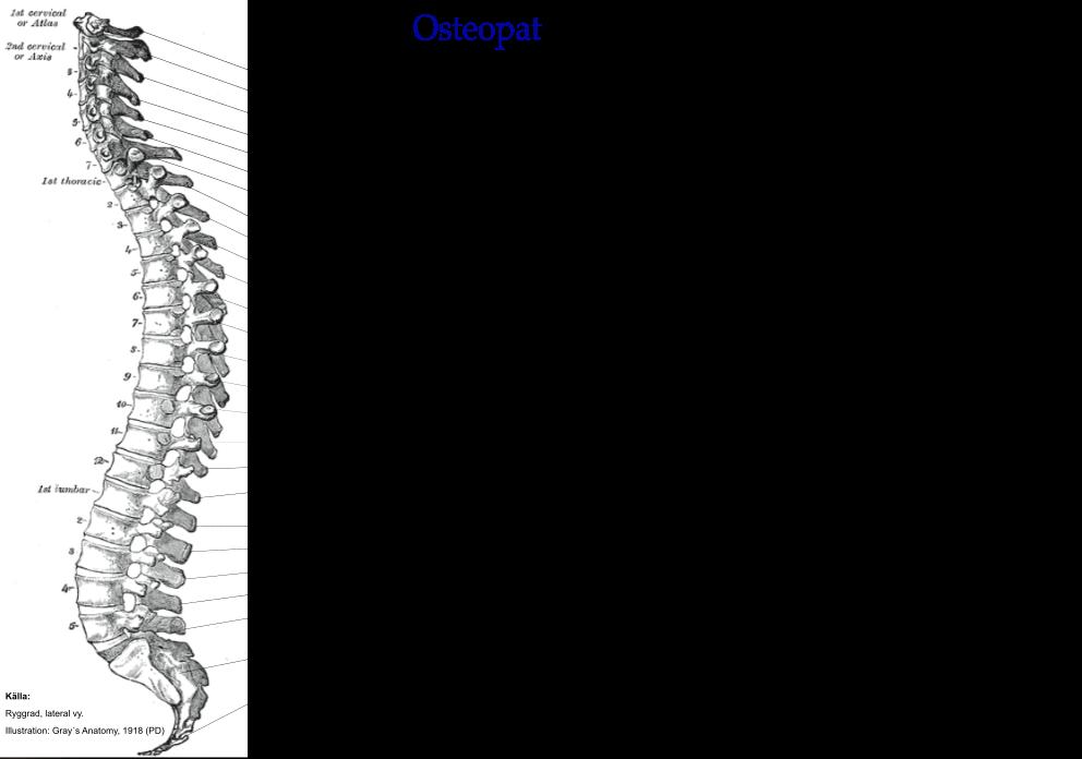Organ och strukturer som kan ge irritation på CNS