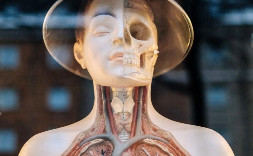 Visceral osteopati